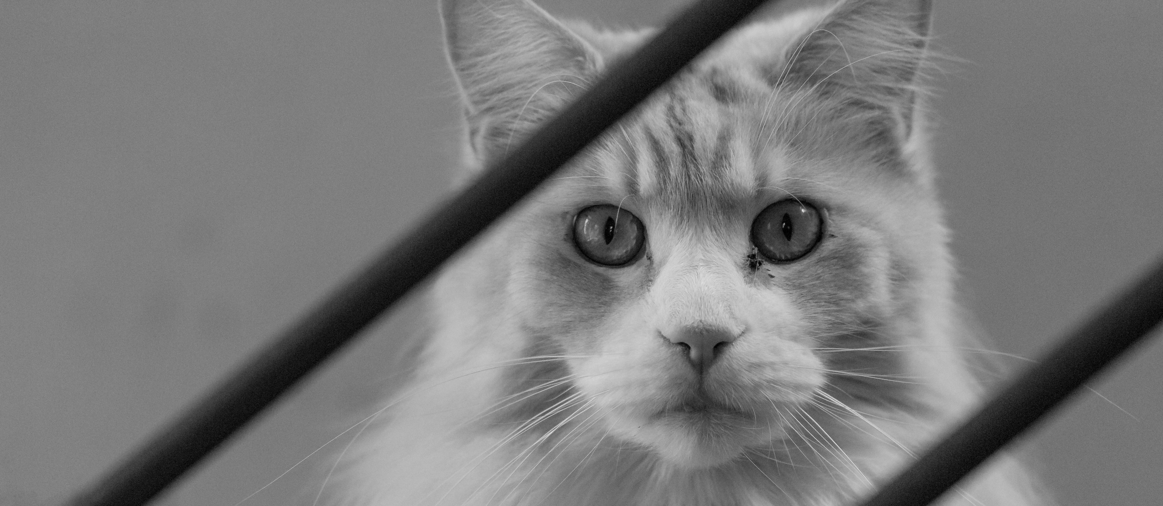 Cat on the stairs in black and white