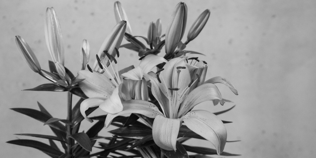 Lillies in black and white
